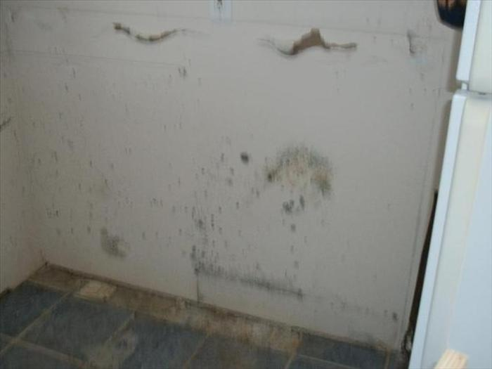 Water & Hidden Mold Damage Before