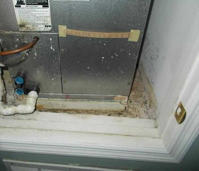 Mold Damage from Air Handler