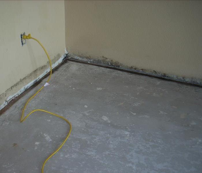 Mold Damage in a Hotel