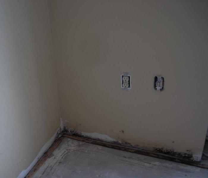 Commercial Orlando Hotel with Water Damage & Mold Remediation