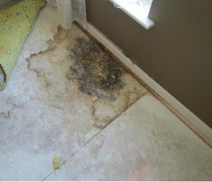 Mold Remediation Mold Discovery