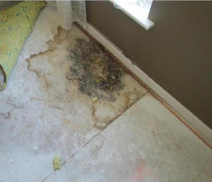Why SERVPRO SERVOPRO of Winter Haven's Mold Remediation